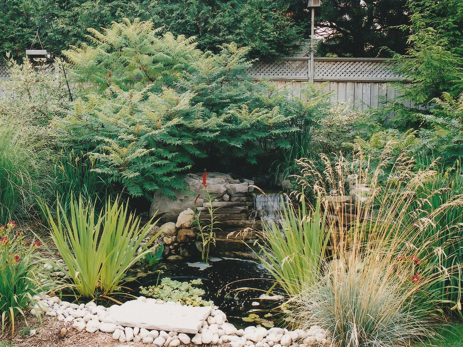 Aquascape Small Pond